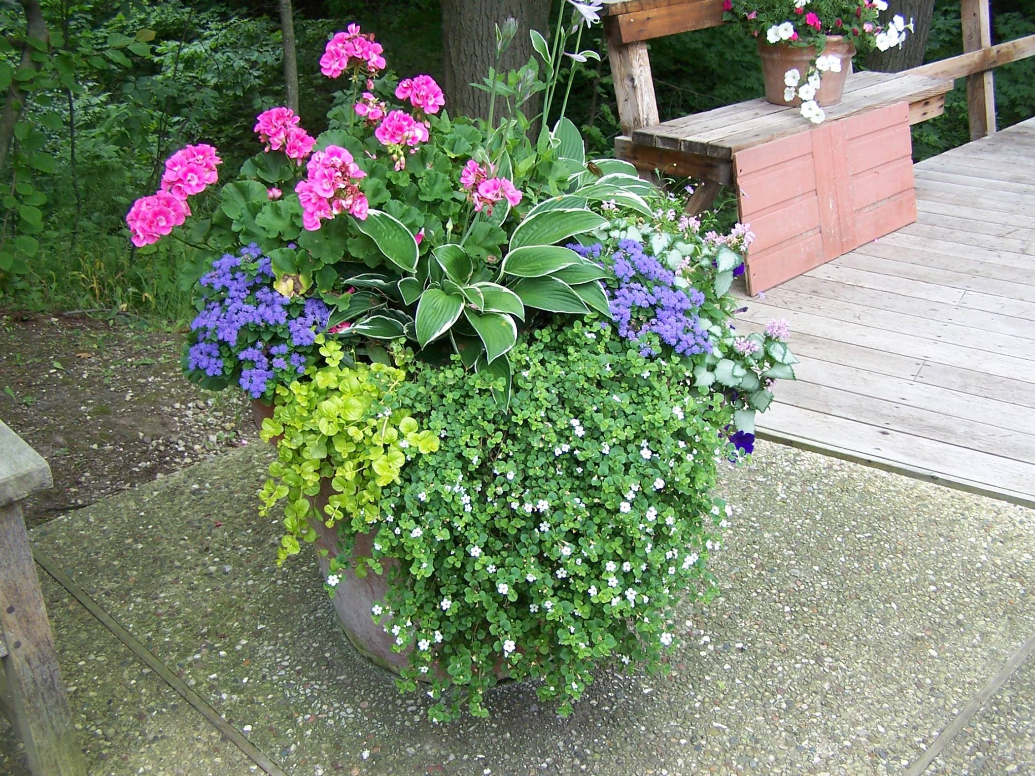 Perennials-with-Annuals